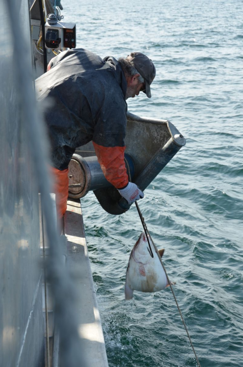 2012.06.01 Thane shakes halibut
