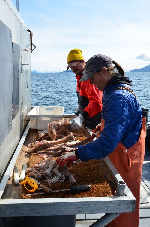 2012.06.01 cutting bait