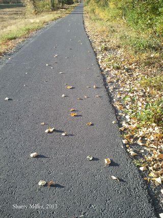 2013.09.23-fall-leaves