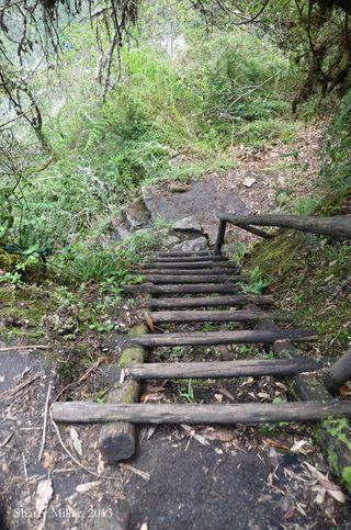 Moon-Temple-trail-ladder