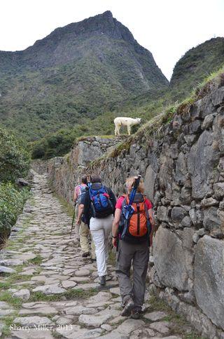 Sun-Gate-trail-with-llama