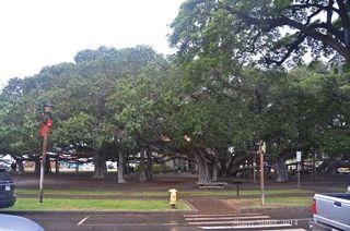 2014-12-23-Lahaina-banyan