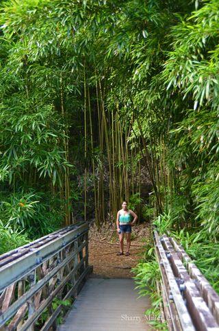 Rowan-in-bamboo-forest