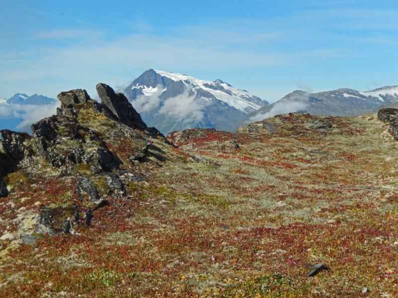 Tundra-and-rocks